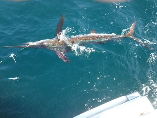 Affordable charters rate online uptickcharters for Oregon inlet fishing charters